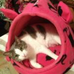 Minnie relaxes in her Crash Pad